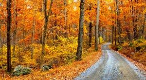 Buy a home this fall season